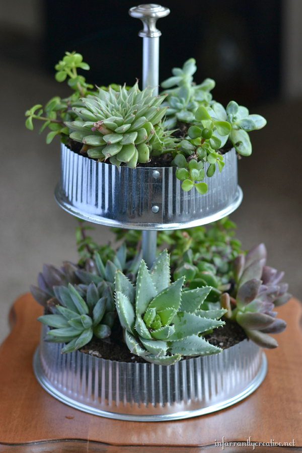 Industrial tiered tabletop succulent garden.