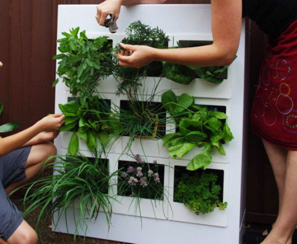 Vertical garden outfitted with modular cubby holes.