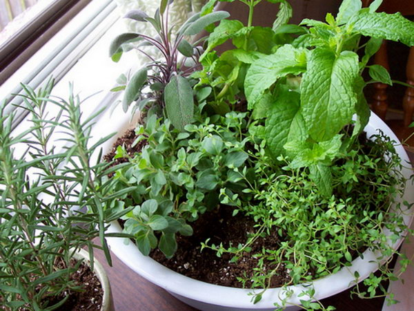Make a one-pot indoor herb garden.