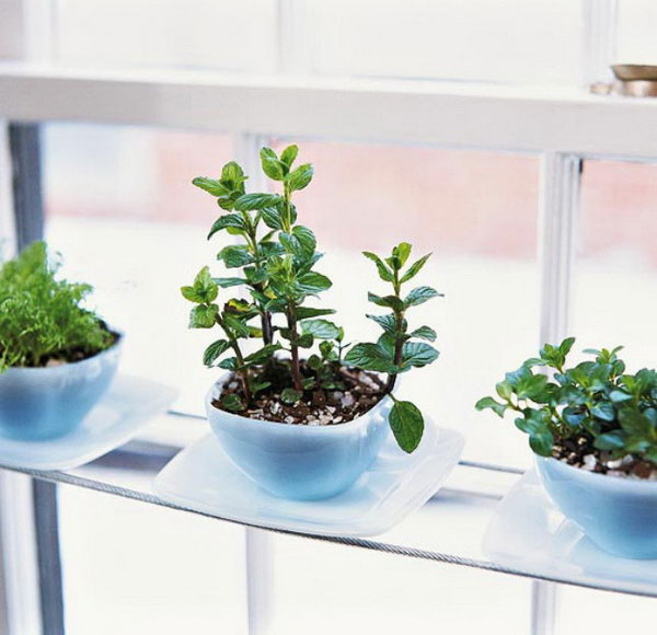 Teacup herbarium.