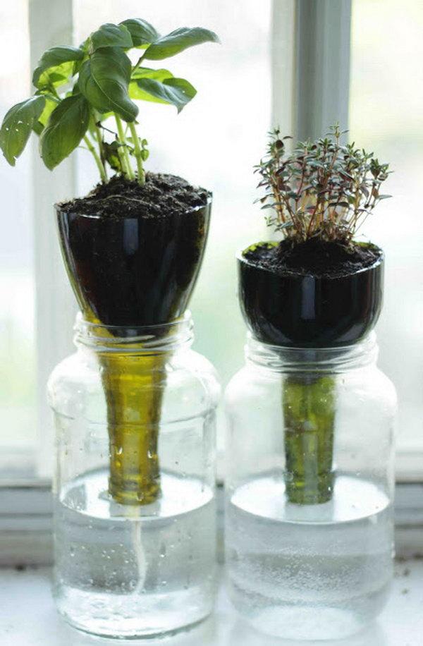 Self watering glass bottle planters.