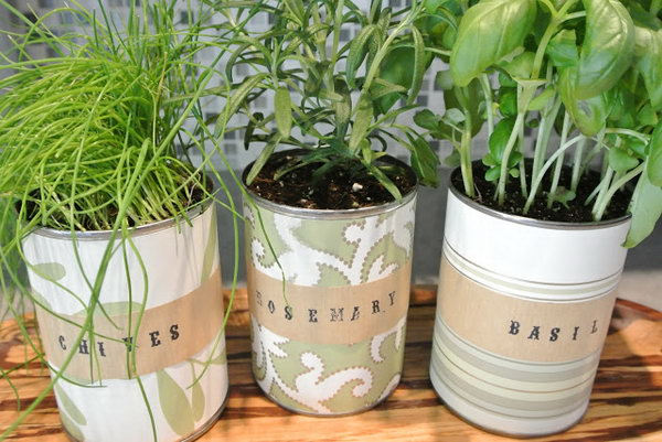 Indoor tin can herb garden.
