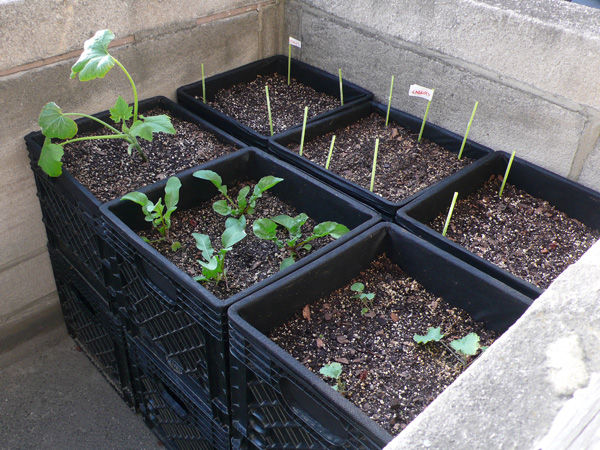 Milk crate container gardening for small space.