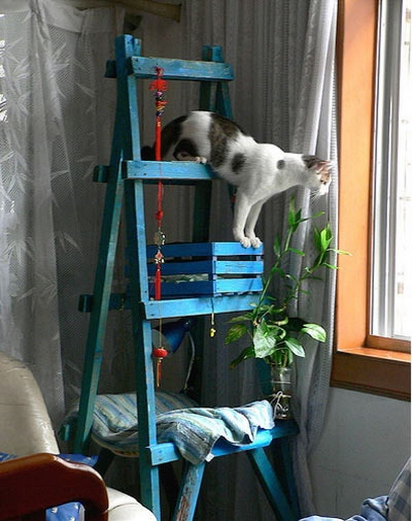 DIY Cat Tree Made out of a Ladder, a Crate and a Piece of Wood .