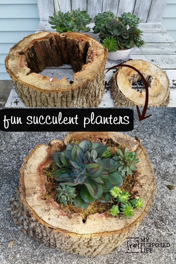 Easy DIY Succulent Planter Made Out Of Old Rotted Tree Trunk.