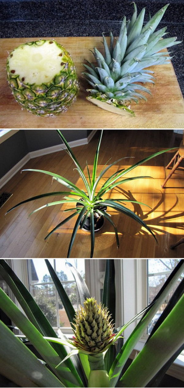 Re-Grow a Pineapple Simply from Planting its Top.