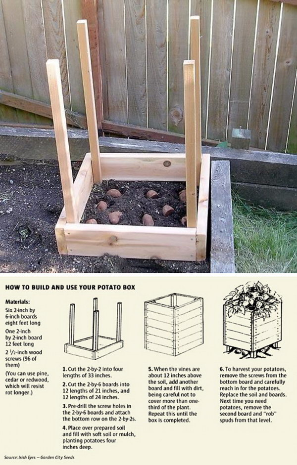 Grow 100 lbs. Of Potatoes In 4 Square Feet.