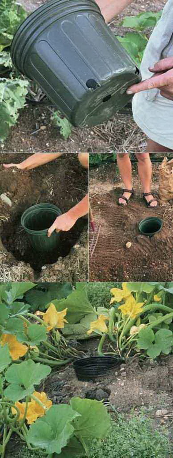 Use The Pot To Water The Roots Easily.